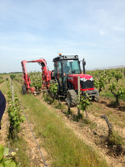 Weed management in the vineyard